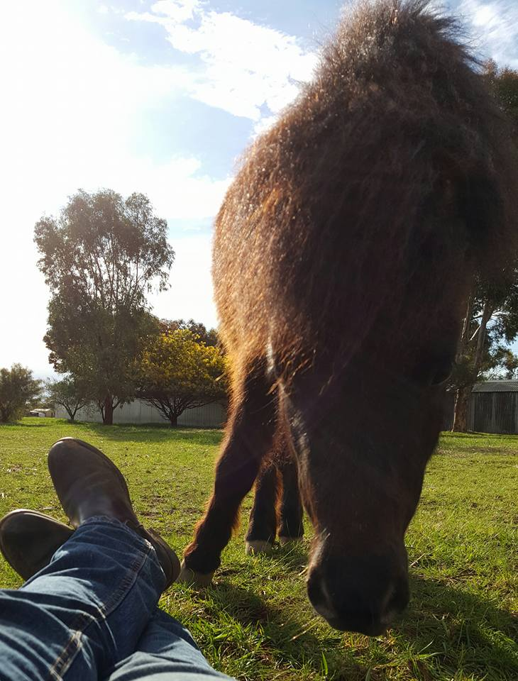 sharing space with Derek, something you may experience during equine assisted therapy sessions